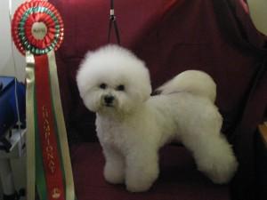 Champion Tilly