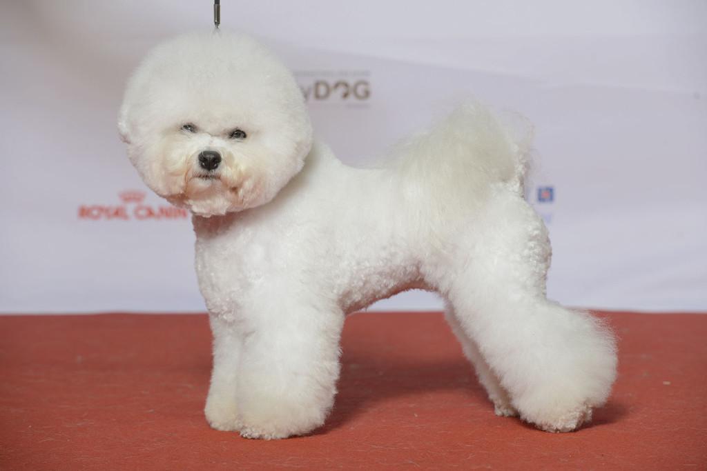 160110-mydog-sonya-bob